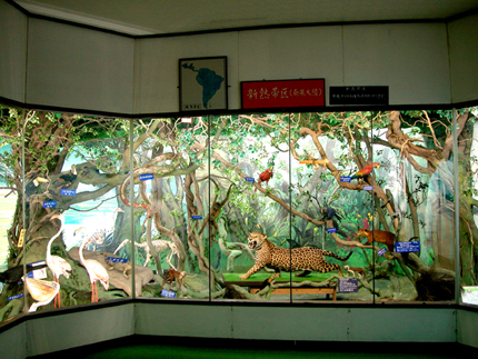 つやま自然のふしぎ館